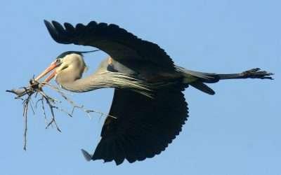 Feathering My Nest – Engage Blog